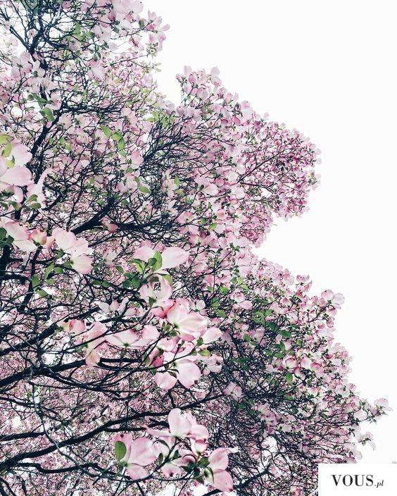 przepiękne różowe kwiaty