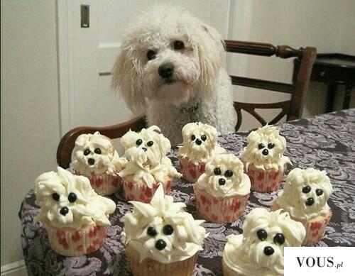 Psiakowe babeczki – muffinki psy
