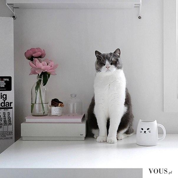 Kot pilnujący książek, pozujący kot