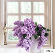 piękny fioletowy bez. jak wygląda fioletowy bez?