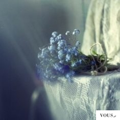 lobelia niebieska , lobelia blue