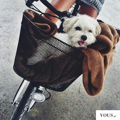szczęśliwy piesek w podróży na rowerze
