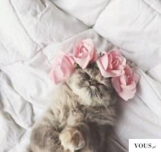kotek z kwiatami