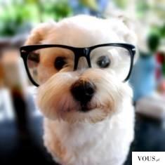 Słodki mały piesek w okularach