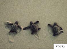 Słodkie małe żółwie