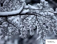 śnieg na drzewach