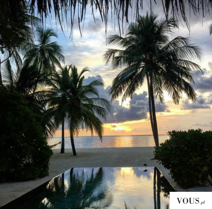idealny poranek palmy