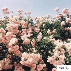 6918a76b499533 róże w jajku ⋆ VOUS.pl