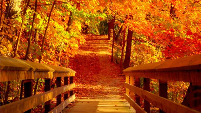 przyroda, natura, jesień – Babstyl | Babstyl