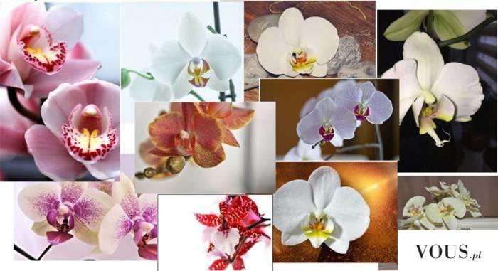 #Storczyki są jednymi z najpiękniejszych kwiatów, będą wspaniałą pamiątką. Oprawione w drewnianą ...