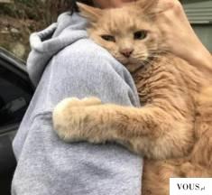 Przytulaśny kotek