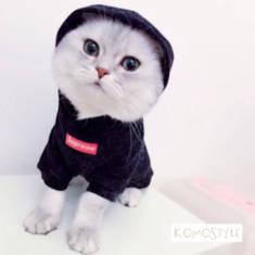 シュプリーム ボックスロゴ付き犬/猫 パーカー ペット洋服 小型犬 猫用服