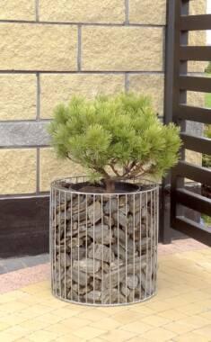 Donica gabionowa wypełniona kamieniami z pięknym małym krzewem w stylu bonzai. Delikatna wizualn ...