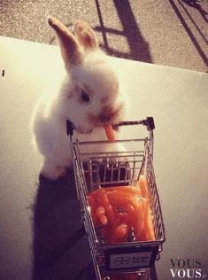 Uroczy króliczek na zakupach