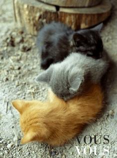 Trzy cudowne maleństwa- małe kotki