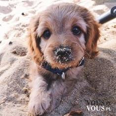 Słodki piesek na plaży