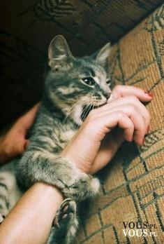kot , jak się bawić z kotem, kot w mieszkaniu to dobry pomysł