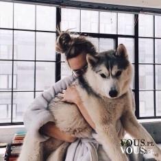 pies husky, lubicie duże psy