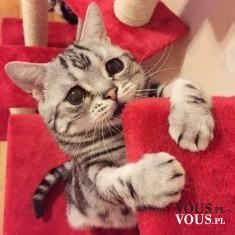 słodki kotek, kocia