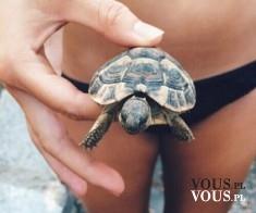 mały żółw, co jedzą żółwie? jak opiekować się żółwiem