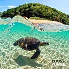 krystalicznie czysta woda, pływający żółw