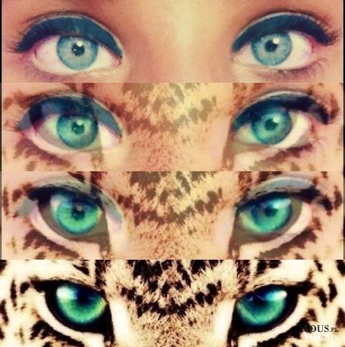 kocie oczy, makijaż jak zwierzę