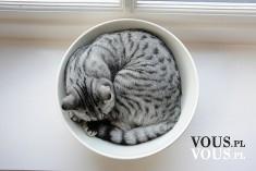 kotek w misce