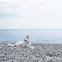 duży pies nad morzem