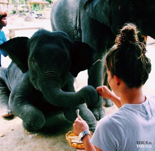 dziewczynka karmi słonia