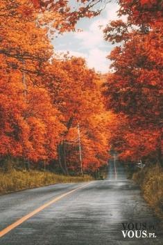 Piękna jesień, alejki, droga w lesie, Gdzie to jest?