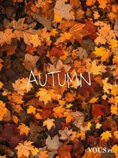 Dzień dobry jesień! Hello autumn. Lubisz jesień?