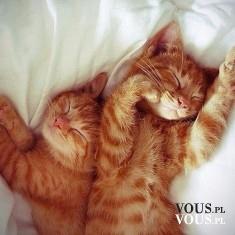 Śpiące kociaki <3 śliczne rude kotki