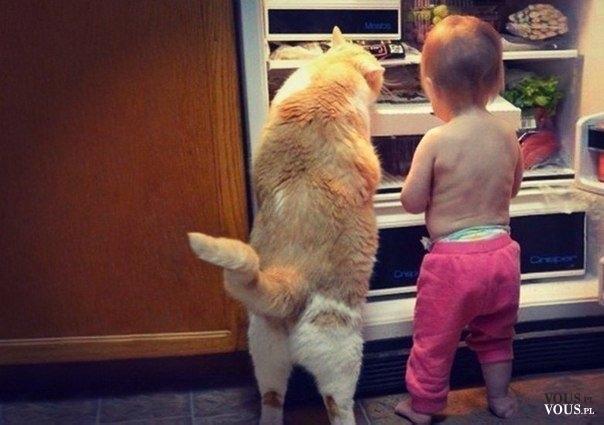 Ciekawe co mają w tej lodówce. Dziecko z kotem i lodówka