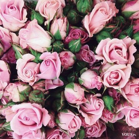 Różowe róże, na walentynki, jaki kolor lepszy, różowy czy czerwony na walentynki?