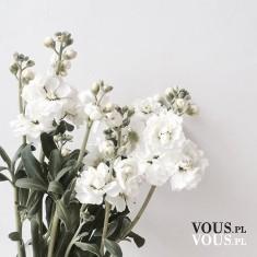 Piękne białe kwiaty