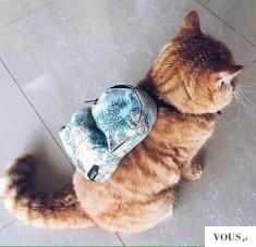 Rudy kot z plecakiem na plecach