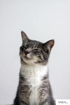 Zadowolony kotek