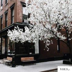 kwitnące drzewo w środku miasta