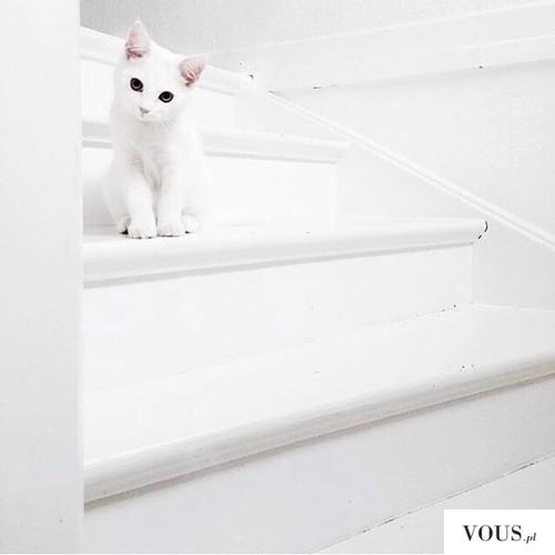 biały kotek na białych schodach