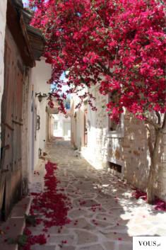 alejka z różami