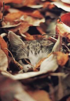 kotek w liściach, pomysły na zdjęcia kotów