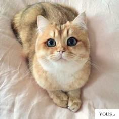 kot z dużymi oczami