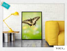 Owady makro mogą stanowić naprawdę piękną oraz uroczą dekorację salonu czy biura.
