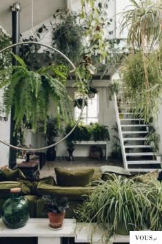 roślinki, ogród wertykalny