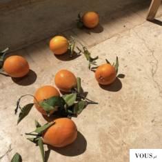 pomarańcze z ogonkami