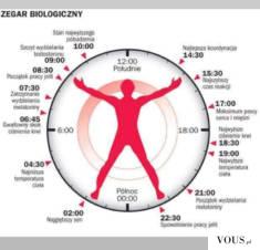 Rytm biologiczny człowieka