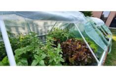 Inspekty ogrodowe pomagają w uprawie roślin na wczesnym etapie wzrostu i chronią je przed negaty ...