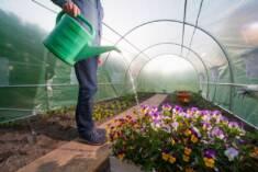 Wnętrze dużego tunelu foliowego, który idealnie nadaje się do uprawy zarówno warzyw jak i kwiató ...