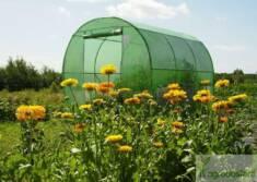 Zielony tunel foliowy na tle kwitnącej łąki to idealne miejsce do uprawy własnych pomidorów. Tun ...